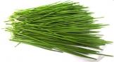 1kg BIO Keimsprossen Weizen Sprossen Superfoods Keimsaat Weizengrassaft Sprossenanzucht - 1