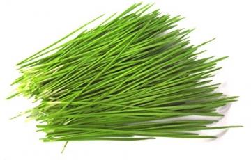 1kg BIO Keimsprossen Weizen Sprossen Superfoods Keimsaat Weizengrassaft Sprossenanzucht - 3