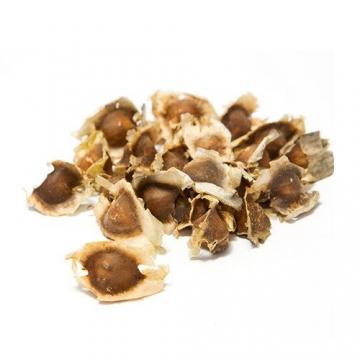 Moringa Samen Pflanzset von Pura Planta zur Anzucht eines Moringa Baum - Moringa oleifera Samen für deinen Moringabaum - Anzuchtset mit Moringa Samen, Topf, Pflanzerde, Bio-Dünger & Pflanzanleitung |- bio-zertifiziertes Baum Geschenk - 2