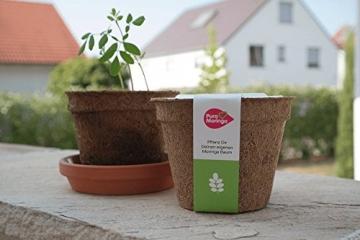 Moringa Samen Pflanzset von Pura Planta zur Anzucht eines Moringa Baum - Moringa oleifera Samen für deinen Moringabaum - Anzuchtset mit Moringa Samen, Topf, Pflanzerde, Bio-Dünger & Pflanzanleitung |- bio-zertifiziertes Baum Geschenk - 4