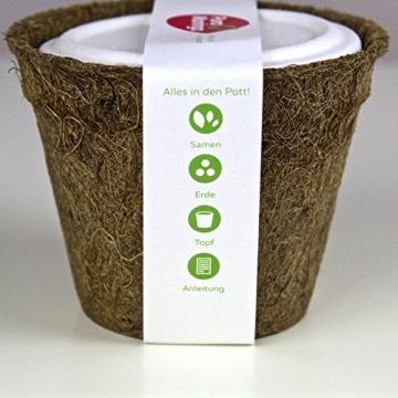 Moringa Samen Pflanzset von Pura Planta zur Anzucht eines Moringa Baum - Moringa oleifera Samen für deinen Moringabaum - Anzuchtset mit Moringa Samen, Topf, Pflanzerde, Bio-Dünger & Pflanzanleitung |- bio-zertifiziertes Baum Geschenk - 6
