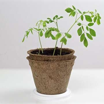 Moringa Samen Pflanzset von Pura Planta zur Anzucht eines Moringa Baum - Moringa oleifera Samen für deinen Moringabaum - Anzuchtset mit Moringa Samen, Topf, Pflanzerde, Bio-Dünger & Pflanzanleitung |- bio-zertifiziertes Baum Geschenk - 8