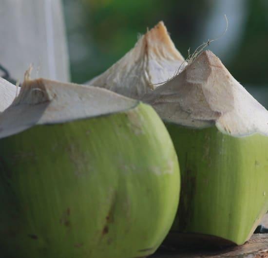 Kokosnuss Trinkkokosnuss