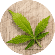 Superfood CBD Cannabidiol